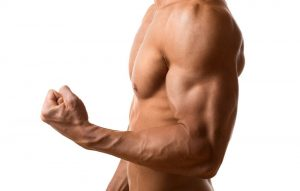 Arm muscles: biceps and triceps
